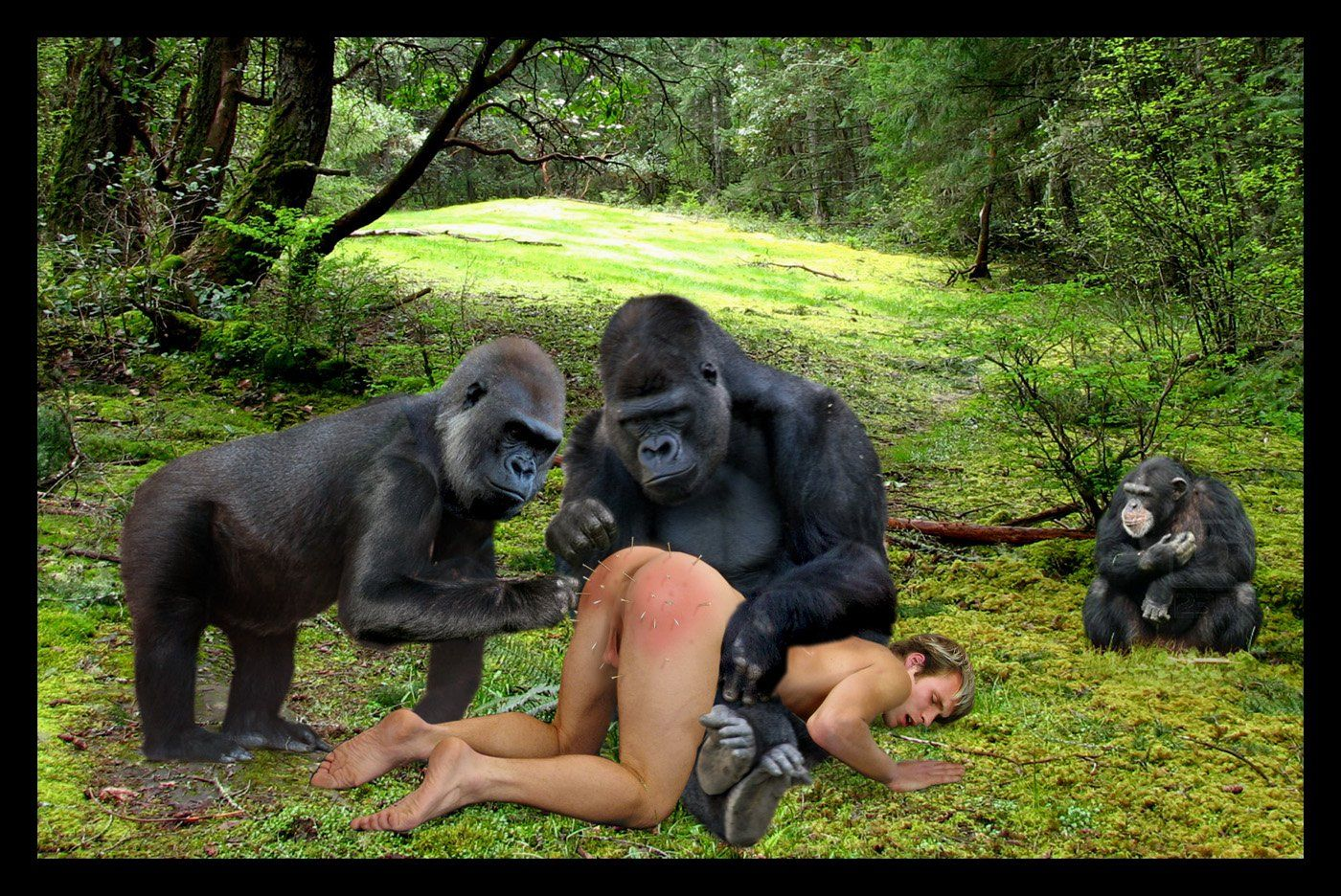 Free Ape Sex Videos gorilla fucking woman pictures - top porn images.