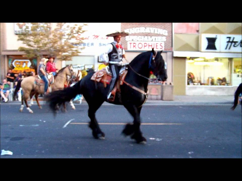 Horses dancing mexican music