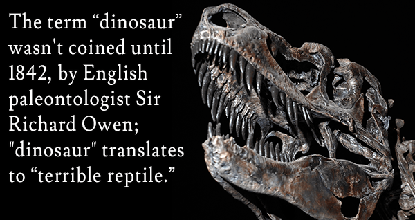 Fun facts about paleontology
