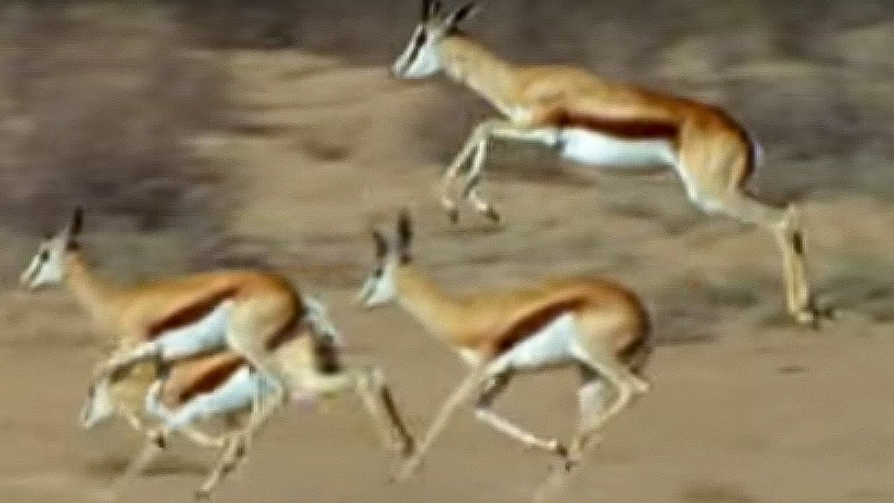 Show me a picture of an antelope