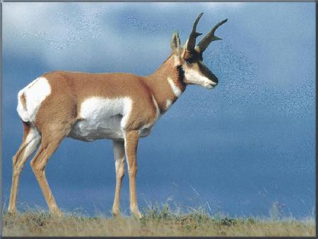 best of Antelope an Show a picture of me